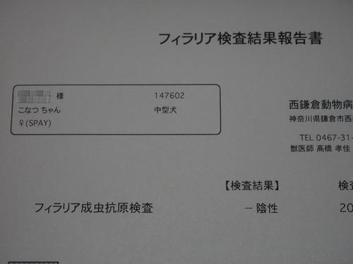P4232418